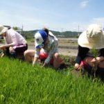 お田植え農業体験はじまりました~農業女子急増中です
