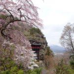 さくら咲く 春のチャイ付き花巡りハイキング